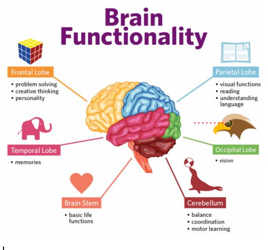 How Brain Works - Intrepreneurship